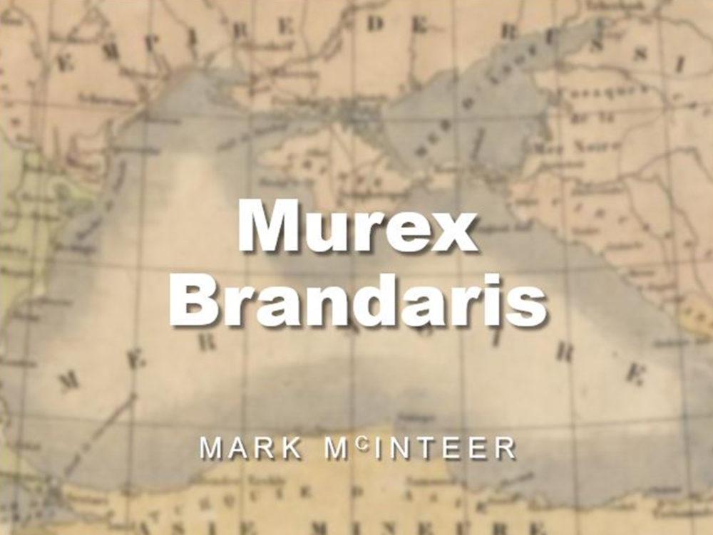 Murex Brandaris Image